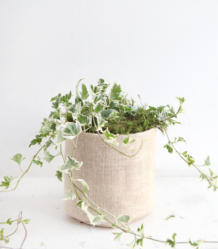 star ivy vintage fabric pot